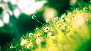 giardino d'estate con sole e margherite