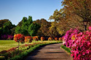giardino autunnale colori